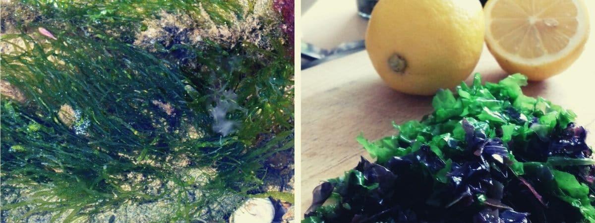 Atelier cuisin'algues Annaon Tourisme Estran St Briac